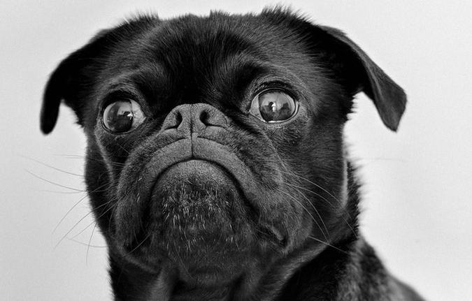 Combien coûte un repas pour un chien