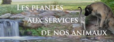 Les plantes aux services de nos animaux