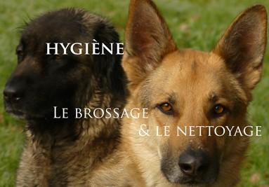Hygiène pour les chiens